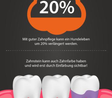 Zahngesundheit Hund