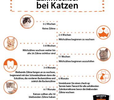 Zahnwechsel Katze