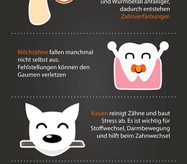 Zahnwechsel Hund
