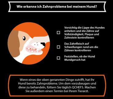 Zahnprobleme beim Hund